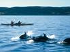 BC - Kayak et baleines