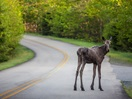 Surprise sur le chemin du Parc National de la Mauricie