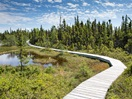 The hiking trails on Île Quarry provide easy access to the boreal  forest