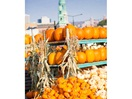 Fall market  - Pumpkin time !  (Atwater Market)