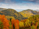 Fall foliage landscape