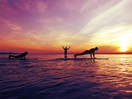 Yoga and Paddle Board et Surfshack - Credit Surfshack