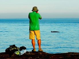 Observation de mammifères marins  (crédit : ACSL, Marc Loiselle)